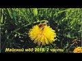 майский мёд 2018 2 часть Song mp3