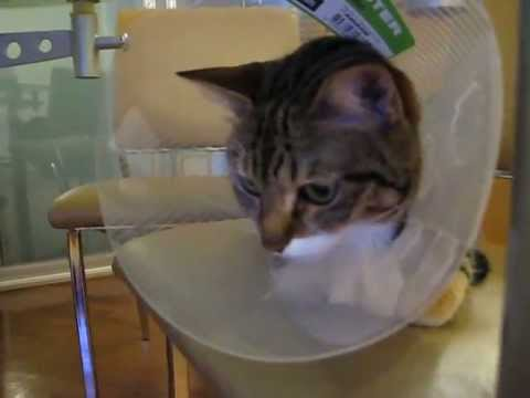 Cat: Leave me alone ! I feel bad after surgery :(