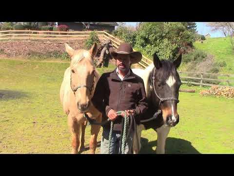The Two Main Reasons Horses Have Behavior Issues, Mike Hughes Auburn California