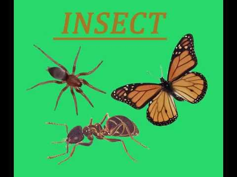 LEARN THE NAME OF INSECTS