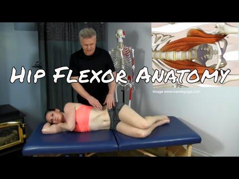 Anatomy & Palpation - The Iliopsoas complex