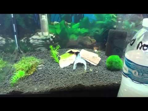 How to kill Hydra and Planaria in a planted tank.