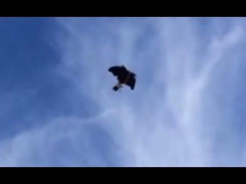 Pet Hawk flying free! soaring/Waiting On! part 2/2