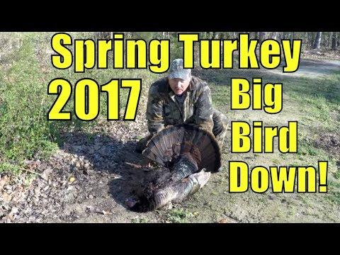 Spring Turkey hunting 2017  BBD!