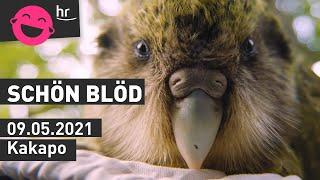 Kakapo | schönblöd