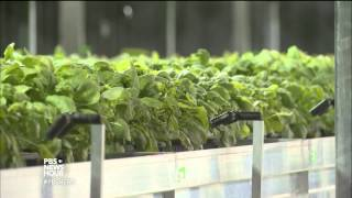 How to grow an Ebola vaccine with a tobacco plant