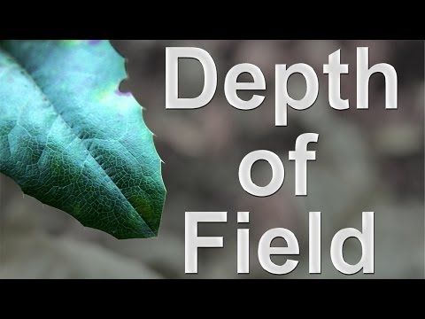 How To Make The Background Blurry - Depth of Field Photography Tutorial DSLR