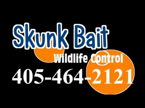 Guthrie OK raccoon removal (405) 464-2121 raccoon removal Guthrie