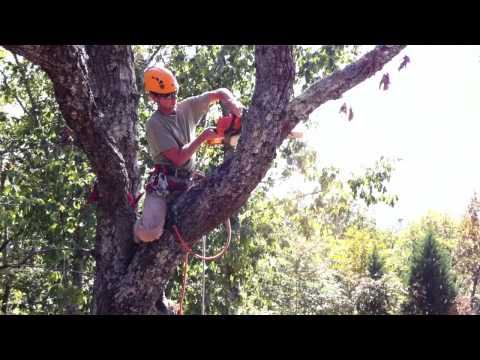 Tree Service in RIchmond, VA trimming off tree branches