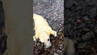 Beached Baby Seal || ViralHog