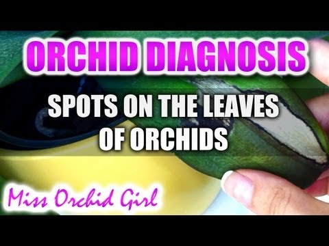 What do spots on Orchid leaves mean?