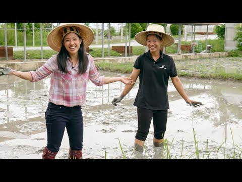 Mini Doc: From Rice Paddy to Table 🌱🍚 HTK Special!