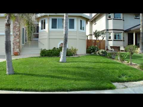 How to maintain a green lawn