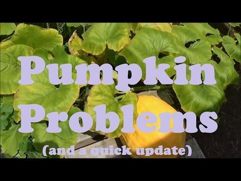 Death of a Pumpkin - Garden update