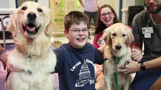 Sit Stay Play Dog Therapy Cook Children