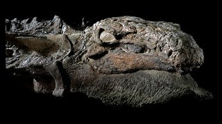A Man Discovered This Dinosaur Fossil In An Old Mine, And What He Found Would Stun Paleontologists