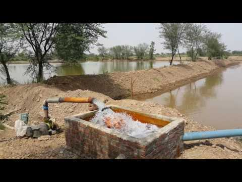 Fish Farms Ch Fish Farms Khanwali Gujrat