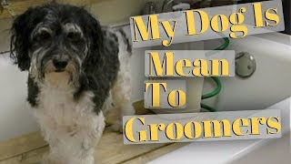 My Dog Is Aggressive To Groomers