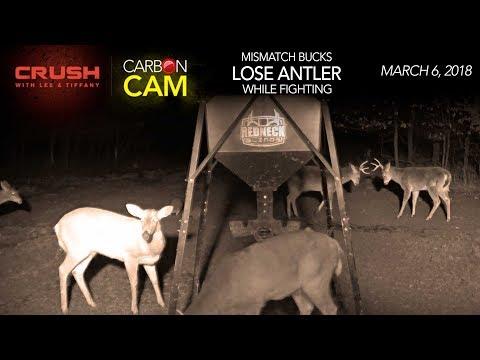 The Crush Live Deer Cam | Buck Fight FAIL