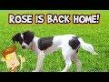 Dog Life Hacks! ROSE COMES HOME? (FUNnel Vision HEX BUGS Vlog)