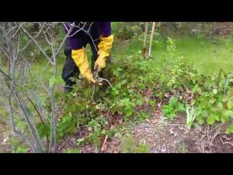 Poison Ivy Removal tips