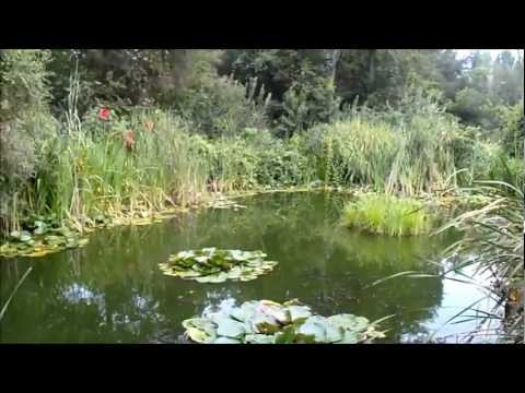 Barley Straw in Pond Experiment