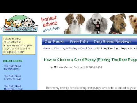 How-To Choose A Puppy Out Of A Litter