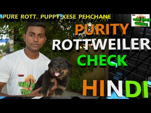 How to Check Purity of Rottweiler Puppy In Hindi | Pure Rottweiler Breed | dog training in hindi