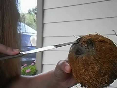 How to Husk a Coconut with a Butter Knife