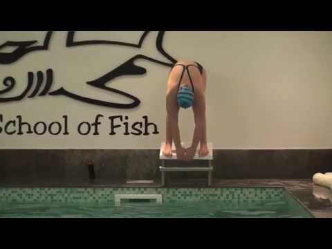 School of Fish Diving Progression