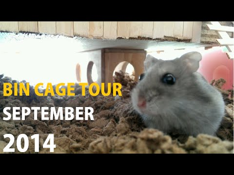 Russian Dwarf Hamster Bin Tour 2014
