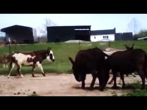 Xxx Mp4 Cute Donkey Mating 3gp Sex