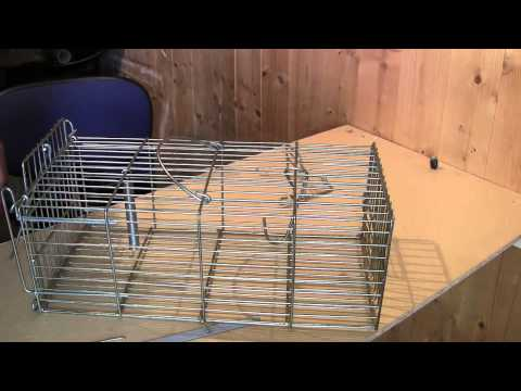 SQUIRREL TRAP : Modifying a  Rat Cage Trap for Squirrels