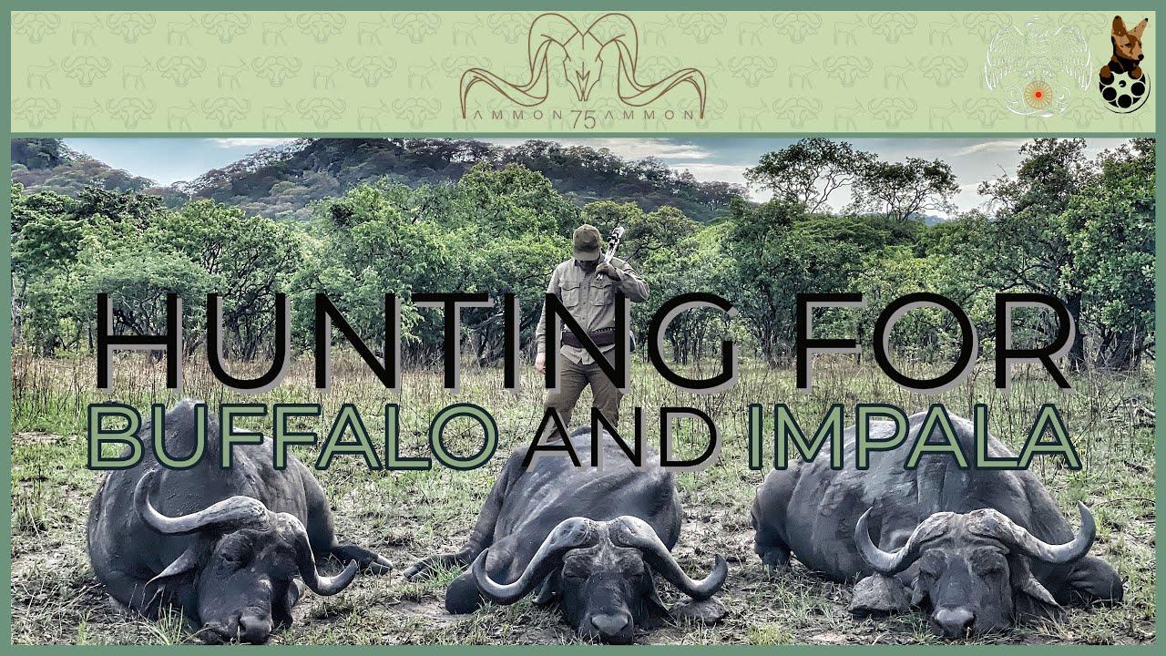 Hunting for Buffalo and Impala