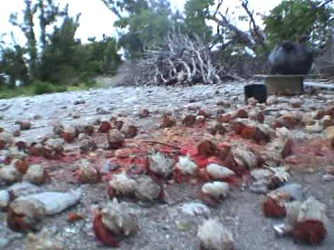 Hermit Crabs Galore - High Def