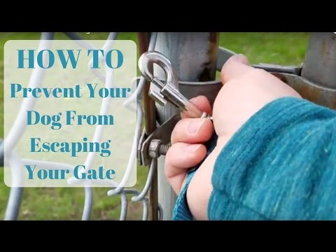 HOW TO Stop Your Dog From Running Away-Securing Gates