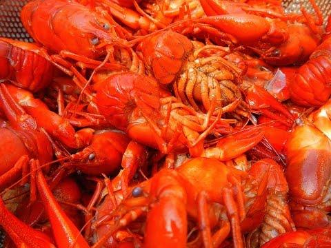 Cascadia Kayak Angler: Timothy Lake Crayfish (Least Deadliest Catch)