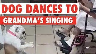 Dog Dances to Grandma