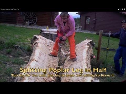 Splitting Massive Poplar Log in Half