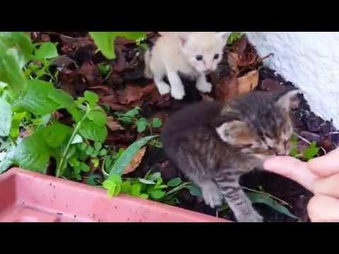 6 New #Feral #Kittens In My #Yard!