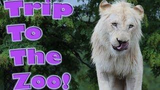 Trip to the Toronto Zoo
