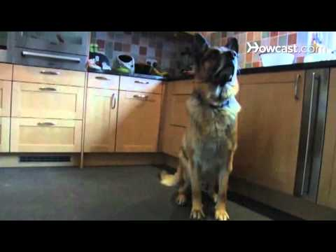 How to Prepare Your Dog for Guard Dog Training