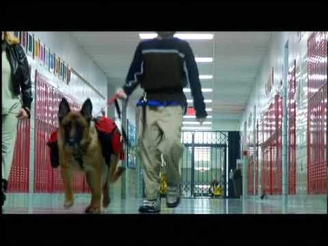 Seizure Response Dogs in School
