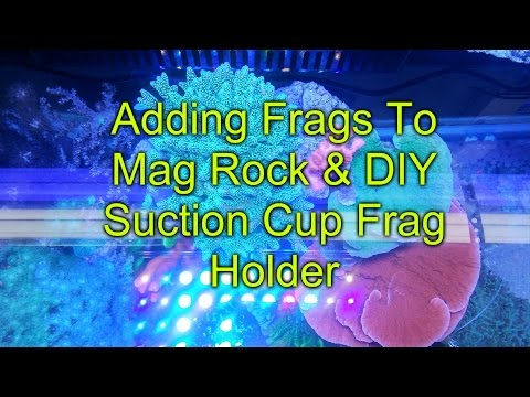 Adding Coral To Mag Rock & DIY Suction Cup Frag Holder | Reef Tank