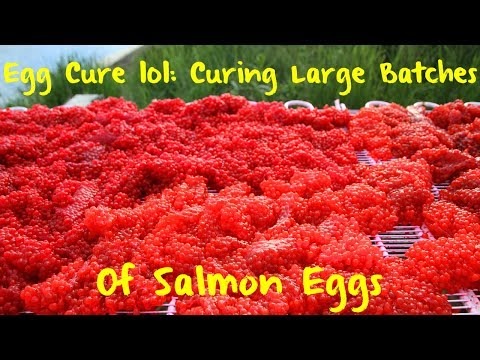 Egg Curing 101: Curing Large Batches of Salmon Eggs
