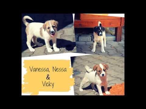 Xxx Mp4 Vanessa Nessa Amp Vicky Animal Life Sibiu 3gp Sex