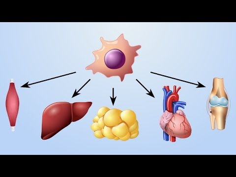 Mechanism of Action of Cell-based Therapies