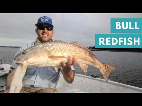 Bull Redfish on Light Tackle !   Fishing Charleston SC