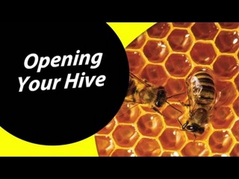 How To Open Your Beehive For Dummies