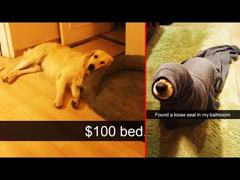 Dogs Snapchats That Are Impawsible Not To Laugh At 「 funny photos 」